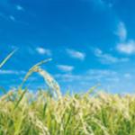 米のしずくのアトピーの改善効果と副作用は?